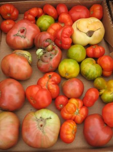 tomatoes-new-orleans