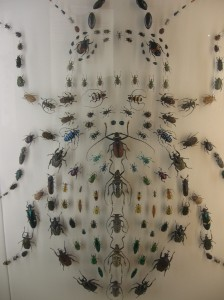 beetles at the new orleans audubon insectarium