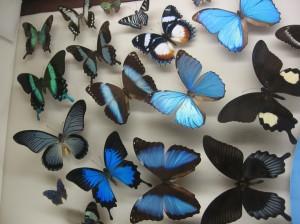 butterflies new orleans audubon insectarium