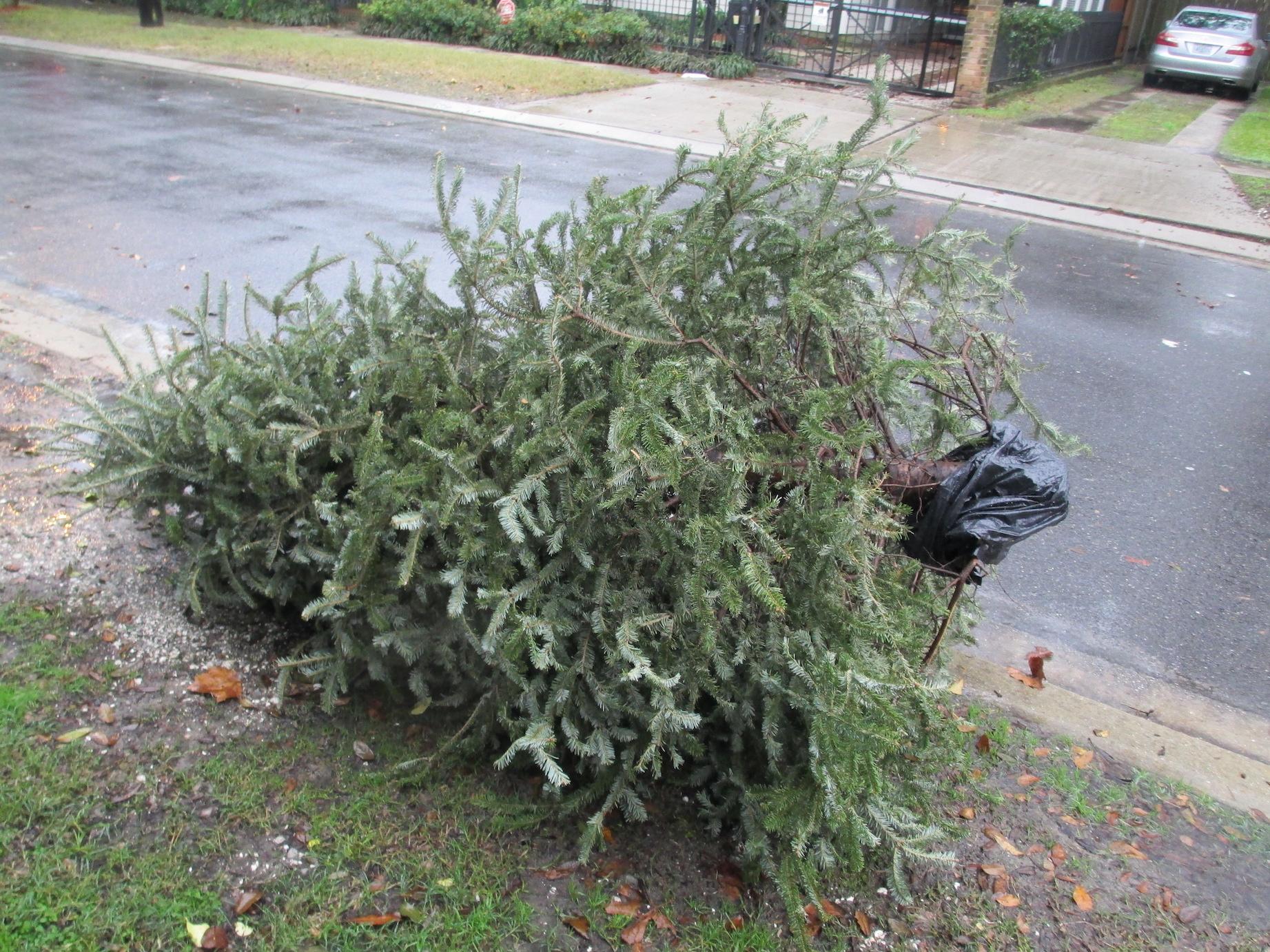 xmas tree curb copy
