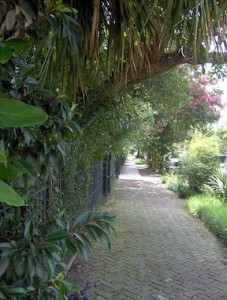 Garden_District,_New_Orleans_in_deep_summer